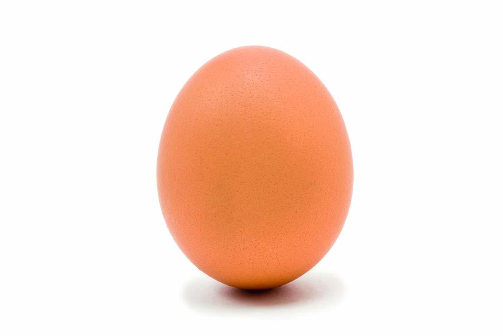 Single whole Hens Egg isolated against white background